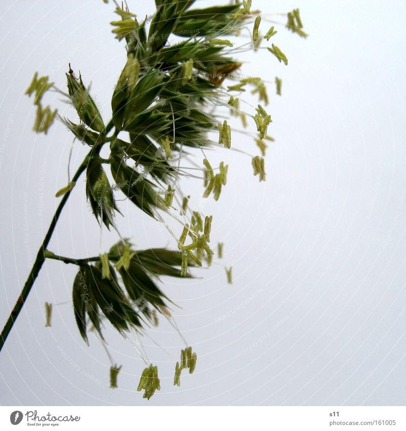 Gras Natur grün Sommer Tier Wiese Haare & Frisuren Kraft Weide Halm Samen fein Futter