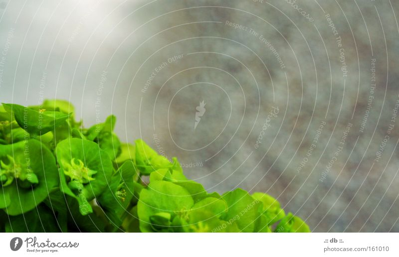 .:: aufdemWEG ::. grün Pflanze Farbe Straße Frühling Spaziergang Kies