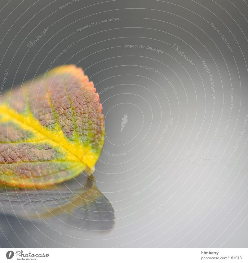 blattcut Herbst Blatt Jahreszeiten Baum Natur Park Makroaufnahme Nahaufnahme garten und landschaftsbau