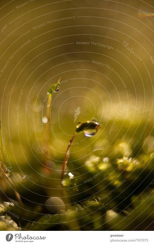 100! Natur Makroaufnahme Wasser Wassertropfen glänzend Frühling Freude Beleuchtung Wärme Farbe