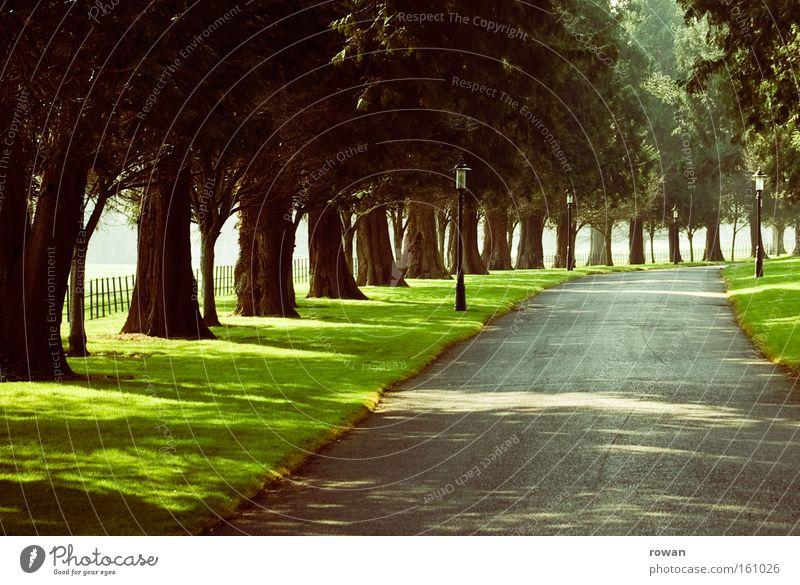 allee Baum Blatt Straße Wege & Pfade frei fahren Spaziergang Amerika Reihe Verkehrswege Schönes Wetter mystisch Allee Landstraße