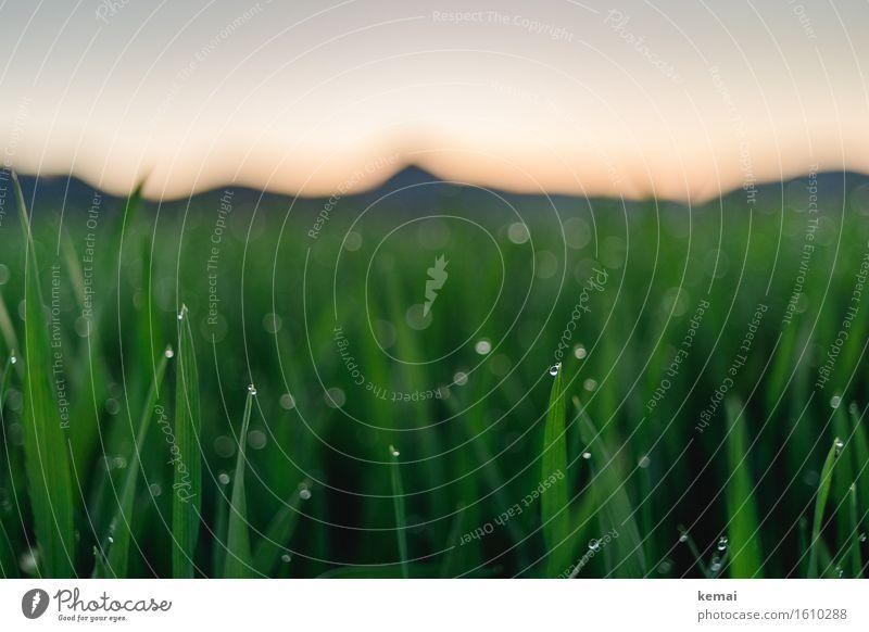 Diamonds on the grass Natur Pflanze Sommer grün Landschaft Erholung ruhig Ferne Umwelt Gras Freiheit Freizeit & Hobby Zufriedenheit glänzend frisch authentisch