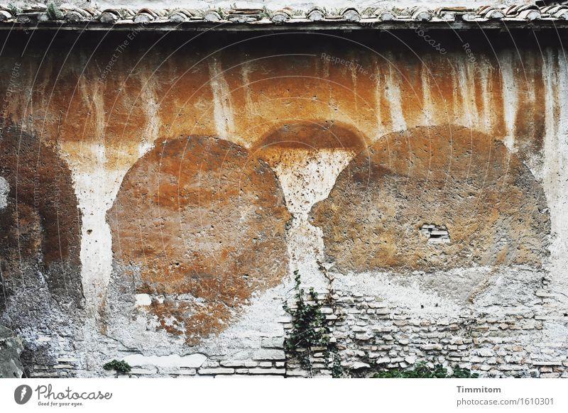 Whispering monks. grün Farbe weiß Wand Gebäude Mauer Stein braun ästhetisch Italien Dach verfallen Putz Grünpflanze