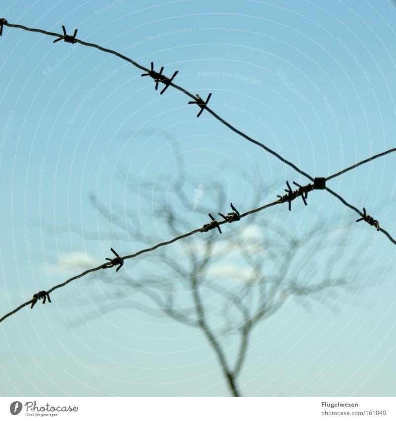 Gefangener Baum Krieg Stacheldraht Zaun Grenze Grenzgebiet Grenzpfahl gefangen Justizvollzugsanstalt kahl Maschendraht Zone Sperrzone verfallen Guantanamo