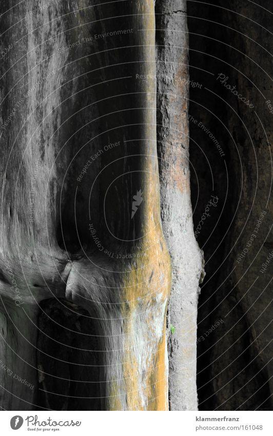 Tropenrinde Kraft Sicherheit Urwald Handwerk Gewicht tragen Halt Baumrinde Baugerüst Skelett Gelenk