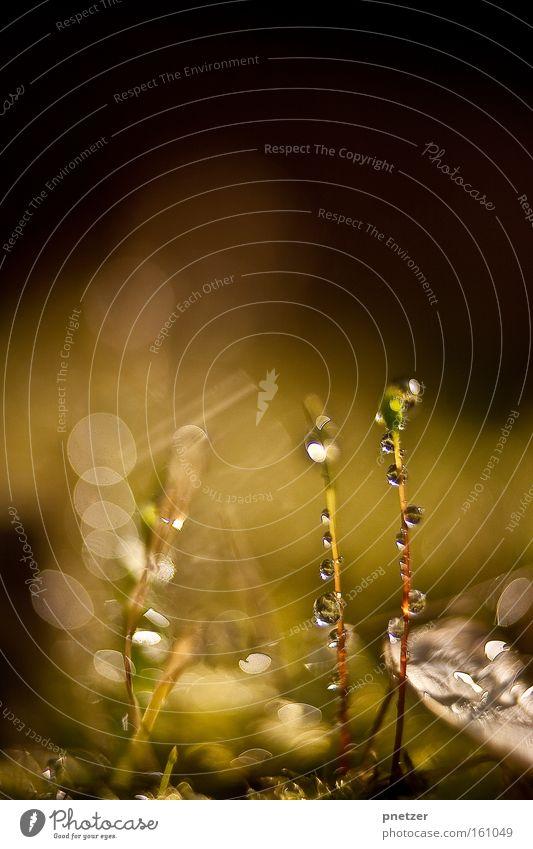 100.2 Natur Makroaufnahme Wasser Wassertropfen glänzend Frühling Freude Beleuchtung Wärme Farbe