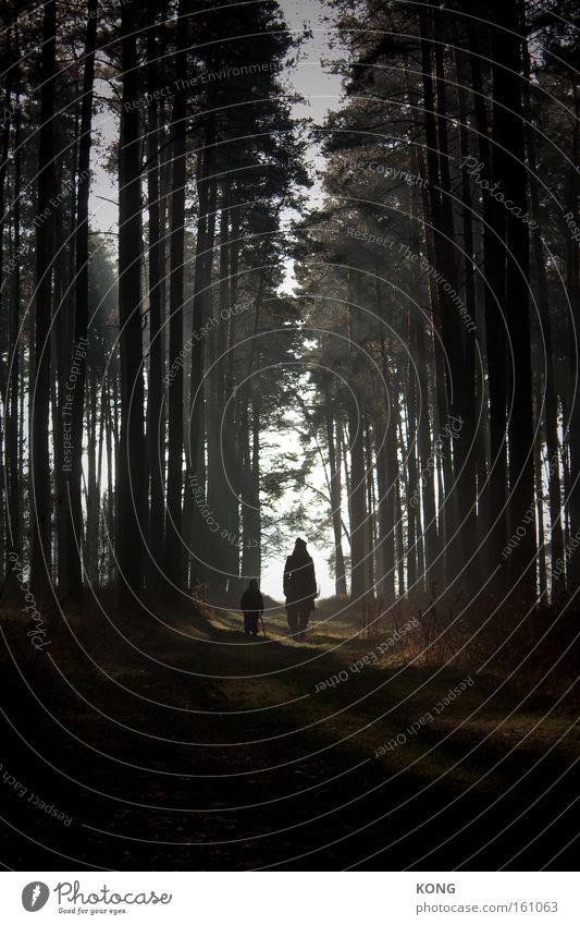 wandertag mit casper david wandern Wald Ausflug mystisch Licht & Schatten Stimmung Dämmerung Spiritualität gehen Spaziergang verwandeln Romantik
