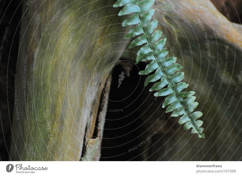 Baumelding Baum Blatt Wachstum Boden Medien hängen Wurzel brilliant Geschlecht Erweiterung Priorität Suppengrün Männliches Genitalsystem