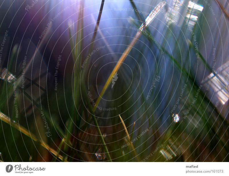 Flare glänzend Beleuchtung Schatten Farbe Unschärfe Gras Sonne Lichteinfall Reflexion & Spiegelung Makroaufnahme Nahaufnahme flirren