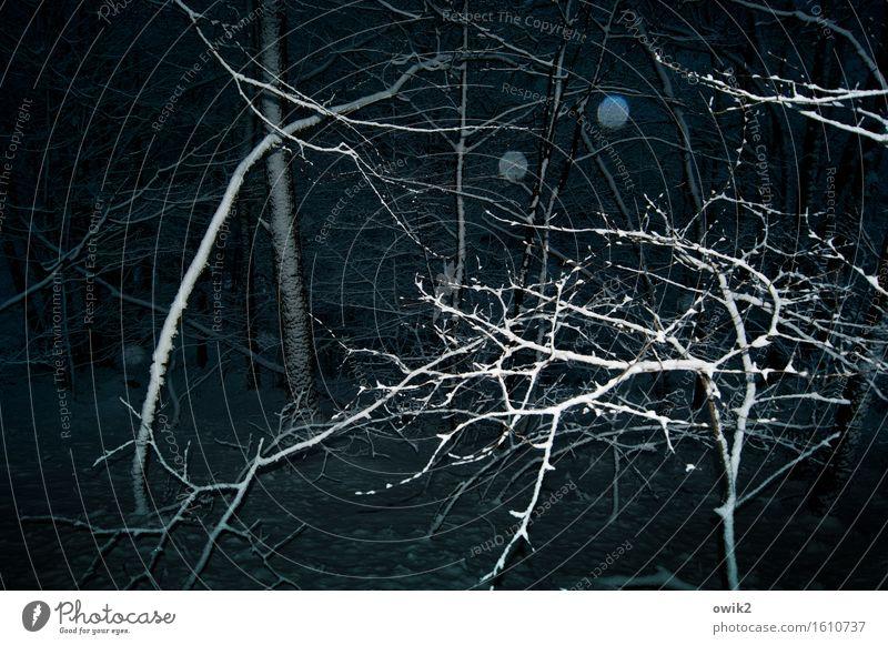 Winter, bizarr Umwelt Natur Landschaft Klima Schönes Wetter Schnee Pflanze Baum Sträucher Zweige u. Äste glänzend bedrohlich dunkel gruselig ruhig glitzern