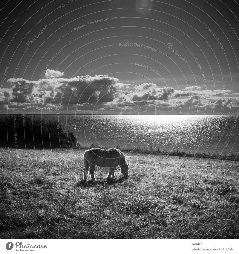 Seepferdchen Ferne Freiheit Umwelt Natur Landschaft Pflanze Tier Luft Wasser Himmel Wolken Horizont Klima Schönes Wetter Baum Gras Sträucher Wiese Ostsee Rügen
