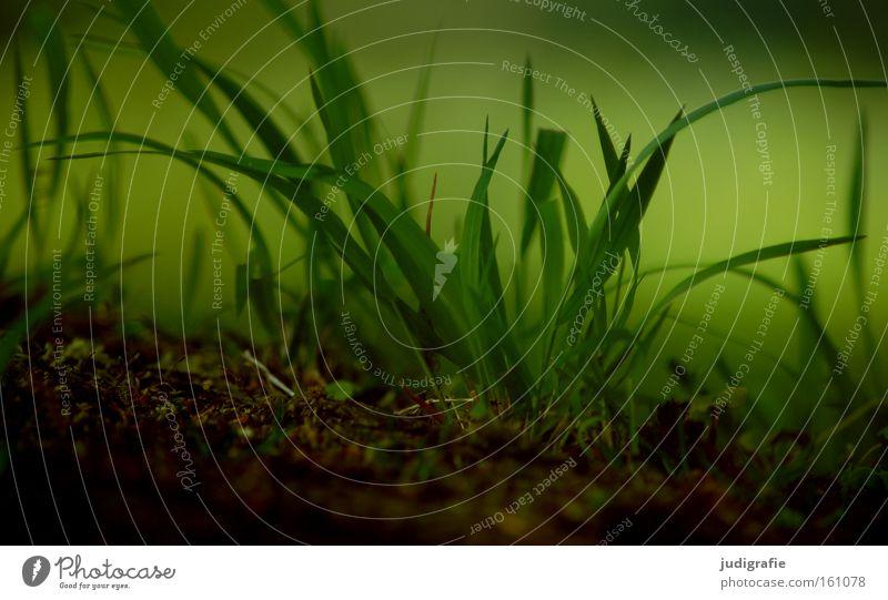 Gras Natur grün Pflanze Farbe dunkel Wiese Umwelt Erde Wachstum Boden geheimnisvoll saftig