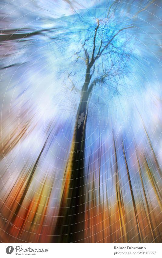 Traumzeit - ein Blick durch Bäume in den Himmel Natur Landschaft Wald wandern authentisch außergewöhnlich fantastisch blau gold Farbfoto Außenaufnahme