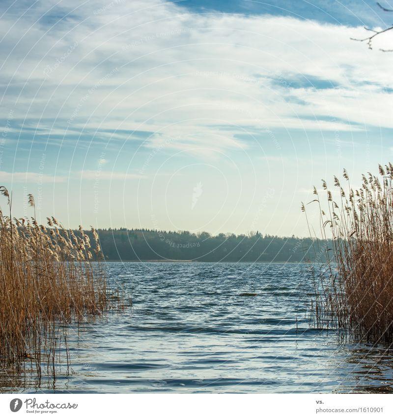 Schülfidülle Ferien & Urlaub & Reisen Ausflug wandern Wasser Wolken Sonne Winter Pflanze Schilfrohr Wald Seeufer ruhig Fernweh Einsamkeit Freizeit & Hobby