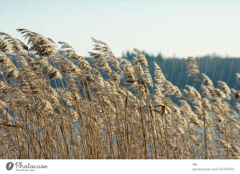 Sturmfrisur Ausflug wandern Umwelt Natur Landschaft Gras Grünpflanze Wildpflanze Küste Seeufer Flussufer genießen maritim Bewegung Mecklenburg-Vorpommern