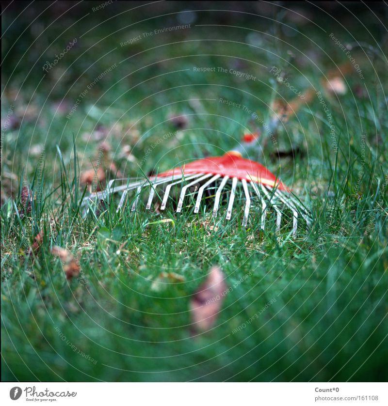 Roter Gartenrechen rot Sommer Blatt Wiese Gras Frühling Garten Park Rasen Gartenarbeit Rechen Gartengeräte