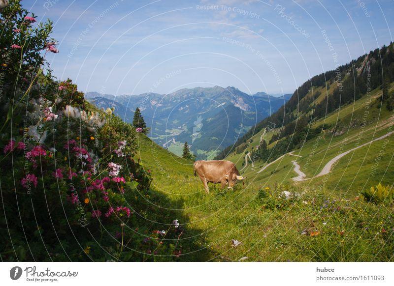zwischen Berg und Tal Ferien & Urlaub & Reisen Pflanze blau grün Sommer Sonne Blume Landschaft Tier Berge u. Gebirge Umwelt Wiese Gesundheit Glück braun Tourismus
