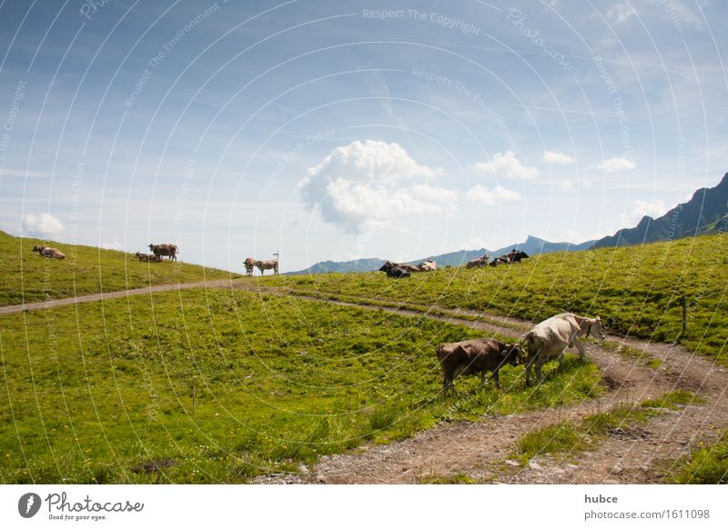 nah am Horizont Ferien & Urlaub & Reisen Umwelt Natur Landschaft Pflanze Himmel Wolken Sonne Sonnenlicht Schönes Wetter Gras Wiese Wege & Pfade Tier Haustier