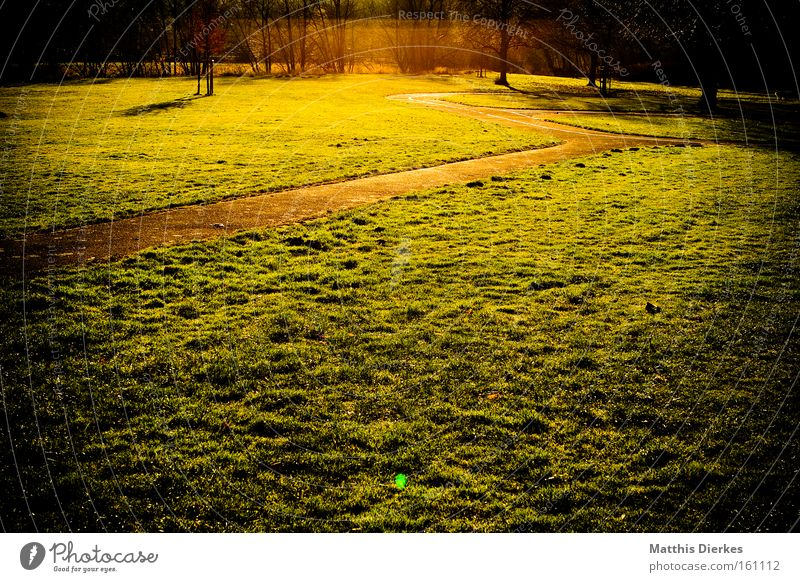frieden grün Baum Sonne Wiese Gras Wege & Pfade gold Spaziergang Ende Unendlichkeit Frieden Fernweh Himmelskörper & Weltall