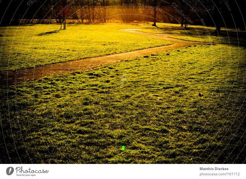 frieden Wege & Pfade Wiese grün Gras Sonne Sonnenuntergang Ende Unendlichkeit Fernweh Baum Licht gold Spaziergang Frieden Himmelskörper & Weltall vignette