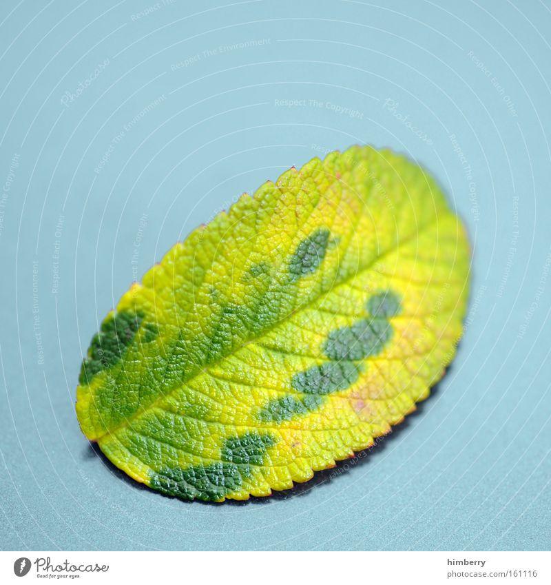 camouflage Blatt Jahreszeiten Baum Natur Park Blattgrün Frühling garten und landschaftsbau