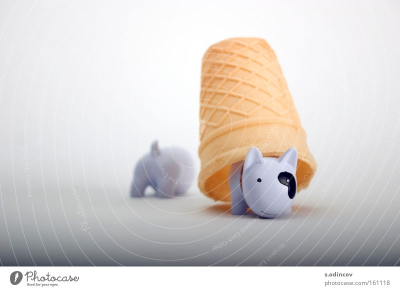 Hund Farbe Angst Speiseeis Säugetier Schwanz Panik Dessert purpur Waffel