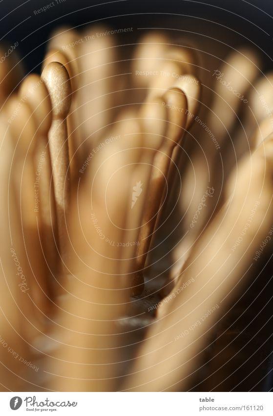 Kämmerer Haarbürste Holz Makroaufnahme Haarpflege Haare & Frisuren braun schwarz Nahaufnahme Dienstleistungsgewerbe Handwerk Friseurbedarf Körperpflege Kosmetik
