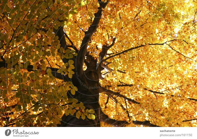 Hofgarten Baum Blatt gelb Herbst Stimmung orange Ast Jahreszeiten Innsbruck