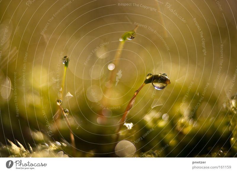 100.3 Natur Makroaufnahme Wasser Wassertropfen glänzend Licht Frühling Freude Beleuchtung Wärme Farbe