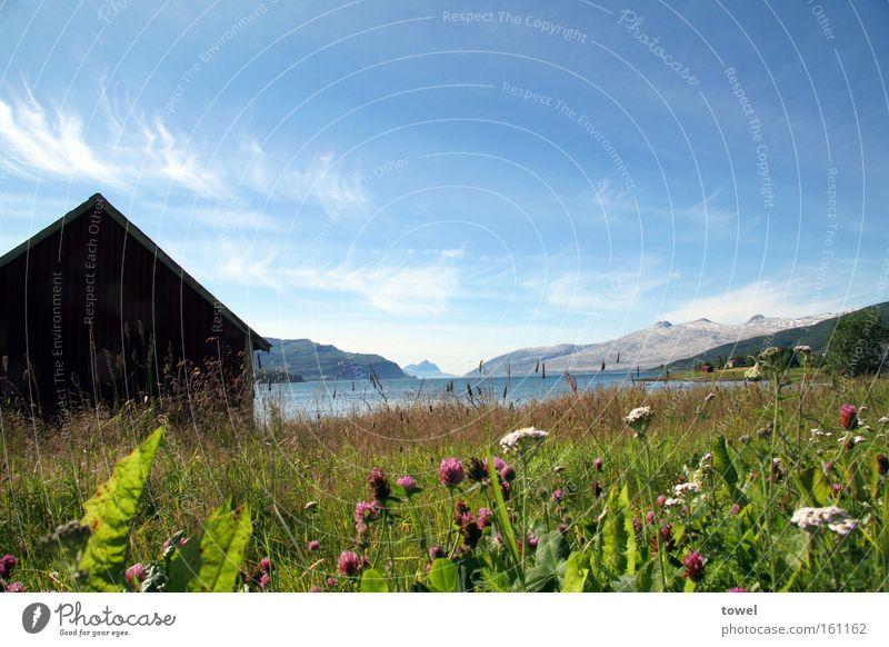 Norwegian Summer Himmel blau Hütte Holz Norwegen Fjord Wiese grün Blume Berge u. Gebirge Gletscher Meer Freiheit Erholung weitläufig Außenaufnahme Landschaft