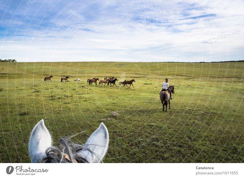 Pferdeholen Reiten Ausflug Mensch feminin Junge Frau Jugendliche 1 Landschaft Pflanze Tier Horizont Schönes Wetter Gras Wiese Feld Herde beobachten Bewegung