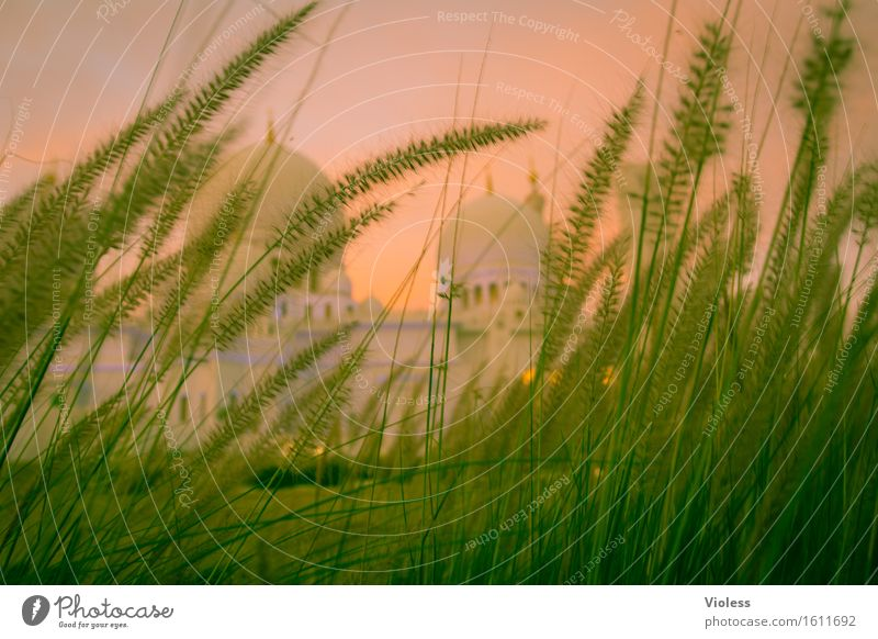 1001 Nacht V Hauptstadt Bauwerk Gebäude Architektur Sehenswürdigkeit Wahrzeichen Denkmal ästhetisch außergewöhnlich historisch Sauberkeit Macht Schutz Abu Dhabi