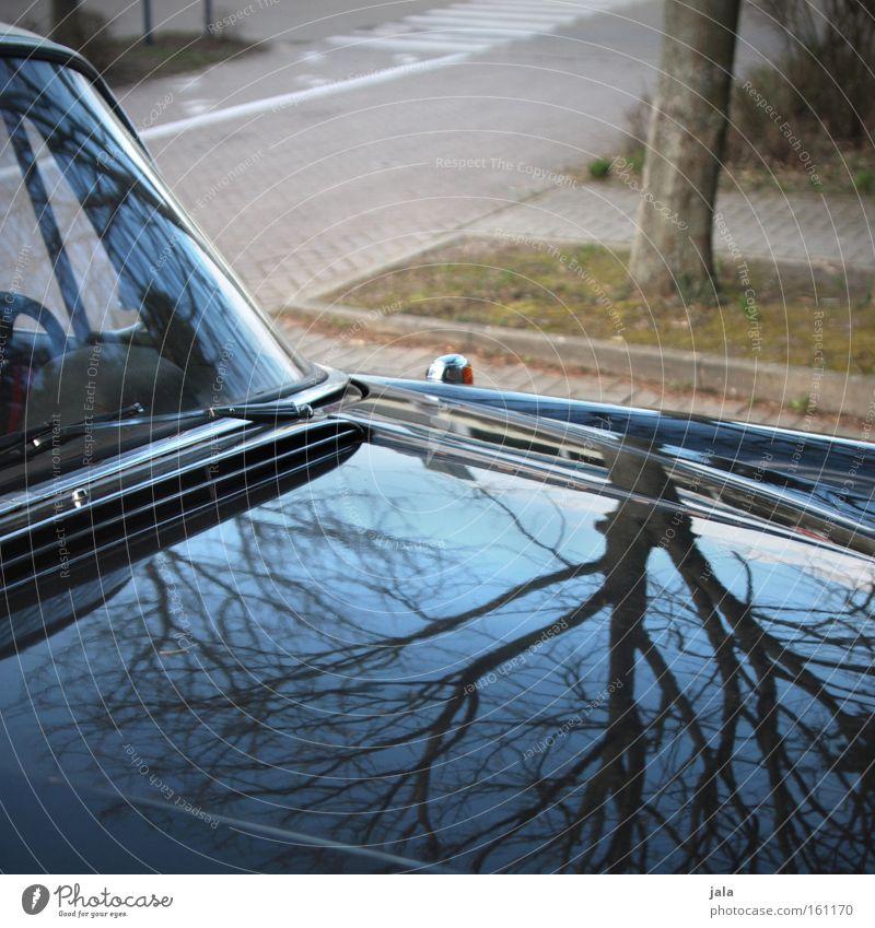 alte liebe Himmel Baum blau schwarz Straße PKW glänzend Verkehr KFZ Verkehrswege Parkplatz Fahrzeug Spiegelbild Lack