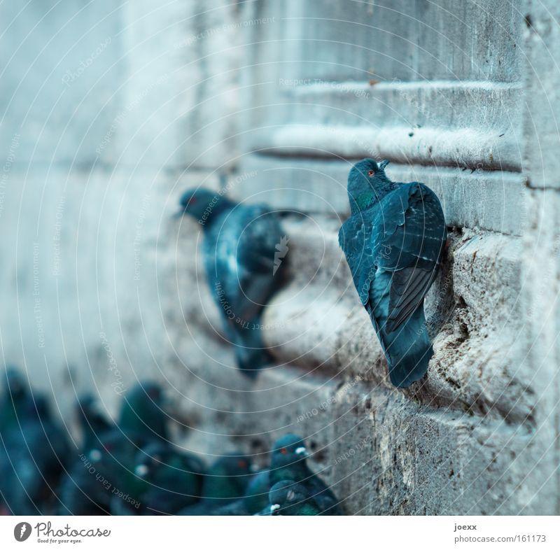 Oben ist es auch beschissen. Wand Mauer Vogel dreckig Macht Kot eng Karriere Taube aufsteigen Lebenslauf Neid Eifersucht Taubenkot