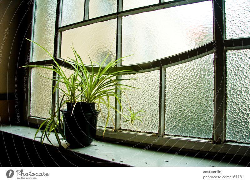 Altbaupflanze Haus Fenster Glas Treppe Flur Klimawandel Stadthaus Blumentopf Grünpflanze Topfpflanze Riffelglas