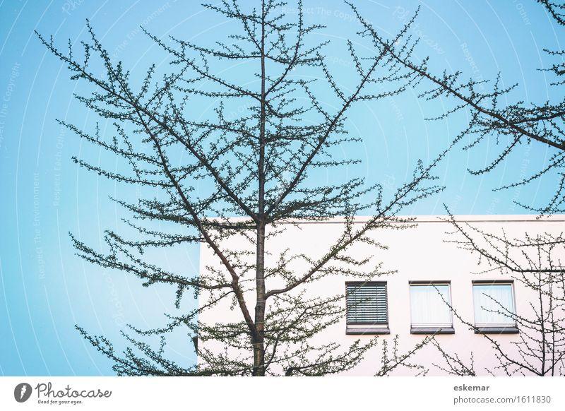 Haus Stadt blau schön weiß Baum Fenster Architektur Wand Berlin Gebäude Mauer Fassade Wohnung Häusliches Leben modern