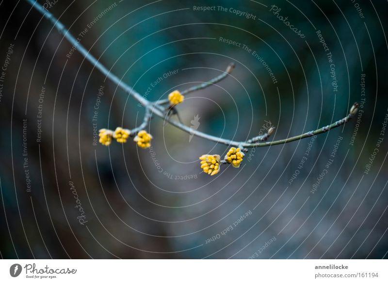 gelb getupft Natur Winter Blüte Frühling Park Hoffnung Wachstum Sträucher zart Zweig Blütenknospen Blattknospe Entwicklung sprießen austreiben