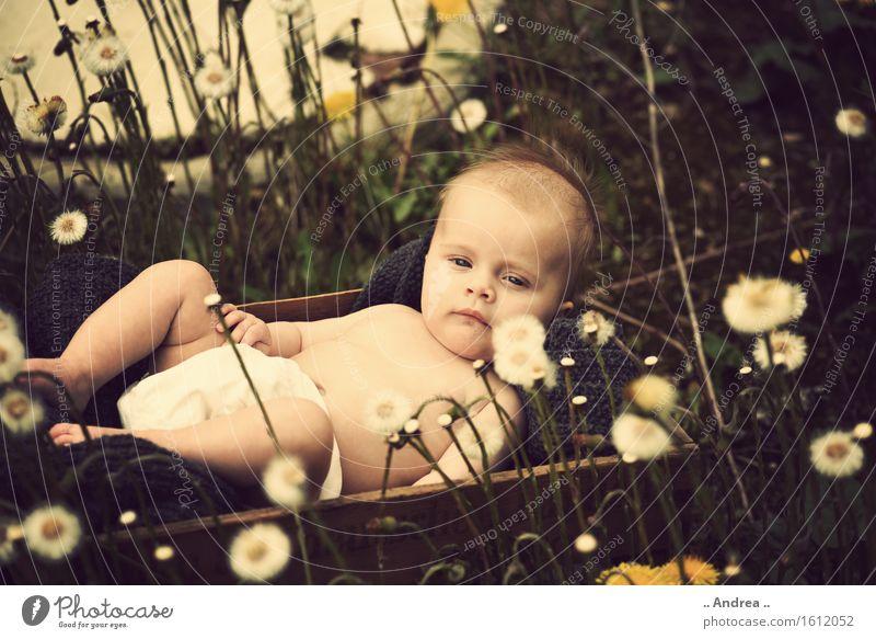 Träumerei im Grünen feminin Kind Baby Kleinkind Mädchen Kindheit 1 Mensch 0-12 Monate beobachten Blühend liegen träumen Traurigkeit verblüht Freundlichkeit