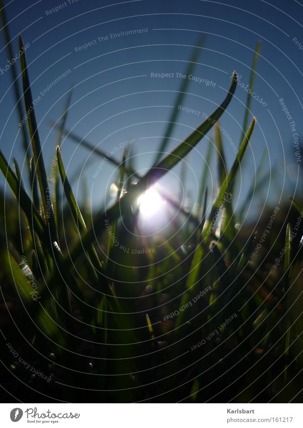 sonnenblind. Himmel Natur blau grün Sonne Sommer ruhig Erholung Wiese Gras Frühling träumen Beleuchtung Kraft frisch Schönes Wetter