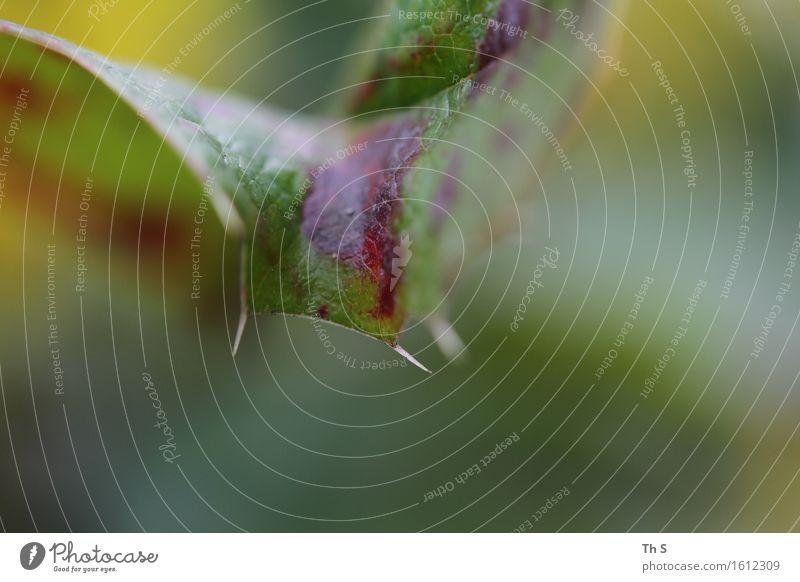 Blatt Natur Pflanze schön grün Sommer rot ruhig gelb Frühling Bewegung natürlich elegant authentisch ästhetisch Spitze
