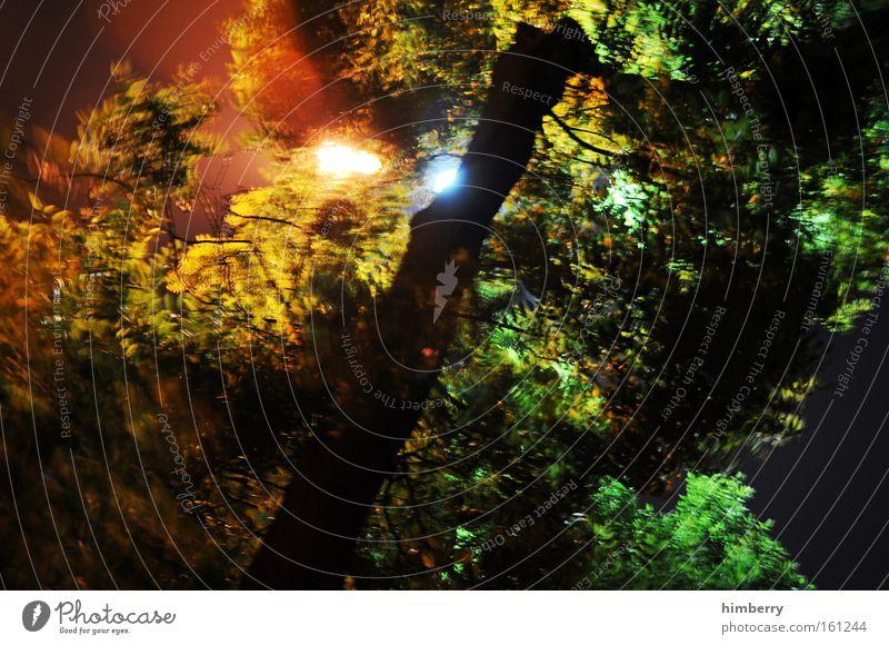 adventure lights Baum Natur Wald Geäst Licht Scheinwerfer Lichttechnik Jagd Tarnung Tarnfarbe Expedition gefährlich Angst Panik Wissenschaften bedrohlich