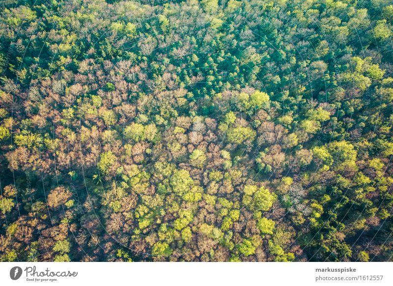 baum welten Natur Ferien & Urlaub & Reisen Sommer Baum Landschaft Ferne Wald Umwelt Frühling Bewegung Freiheit fliegen Tourismus wandern ästhetisch Ausflug