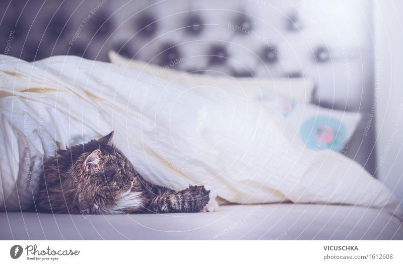 Katze im Bett unter der Decke Erholung Tier Freude Lifestyle Wohnung Häusliches Leben Haustier Schlafzimmer Bettdecke