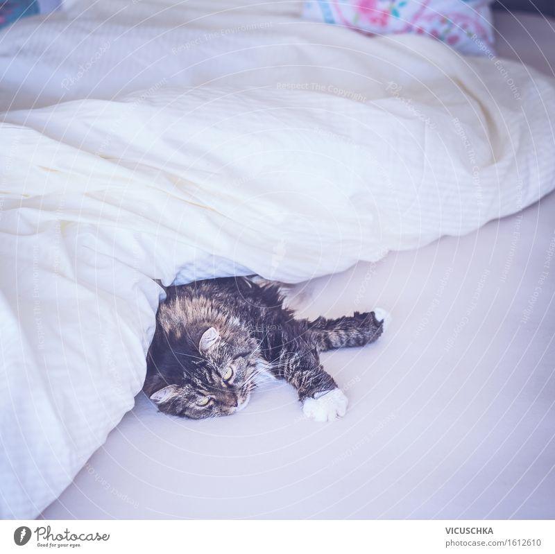 Katze liegt bequem im Bett unter Decke Lifestyle Freude Häusliches Leben Wohnung Schlafzimmer Tier Haustier 1 gelb Dekadenz Design Wochenende gemütlich niedlich