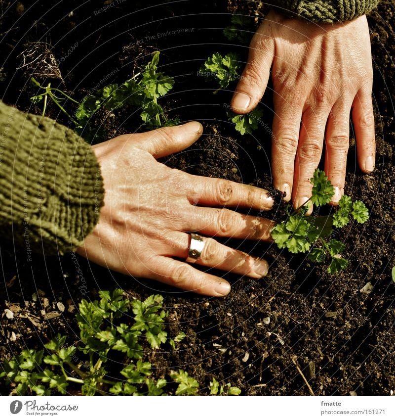 Garten Hand Erde Pflanze Petersilie säen Boden Gärtner Freude