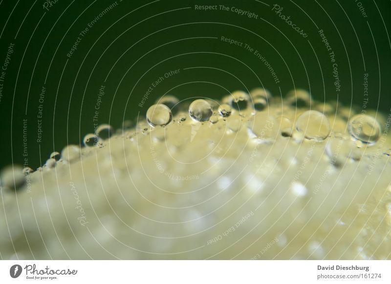 Kiss from the rain Natur grün Wasser gelb Regen Wassertropfen nass rund Tropfen Kugel silber Gewitter Oberfläche Anschnitt feucht Bildausschnitt