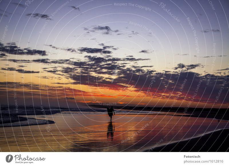 in den Sonnenuntergang gesurft Surfen Ferien & Urlaub & Reisen Tourismus Ferne Strand Meer Surfer Mensch maskulin 1 Landschaft Wasser Himmel Wolken