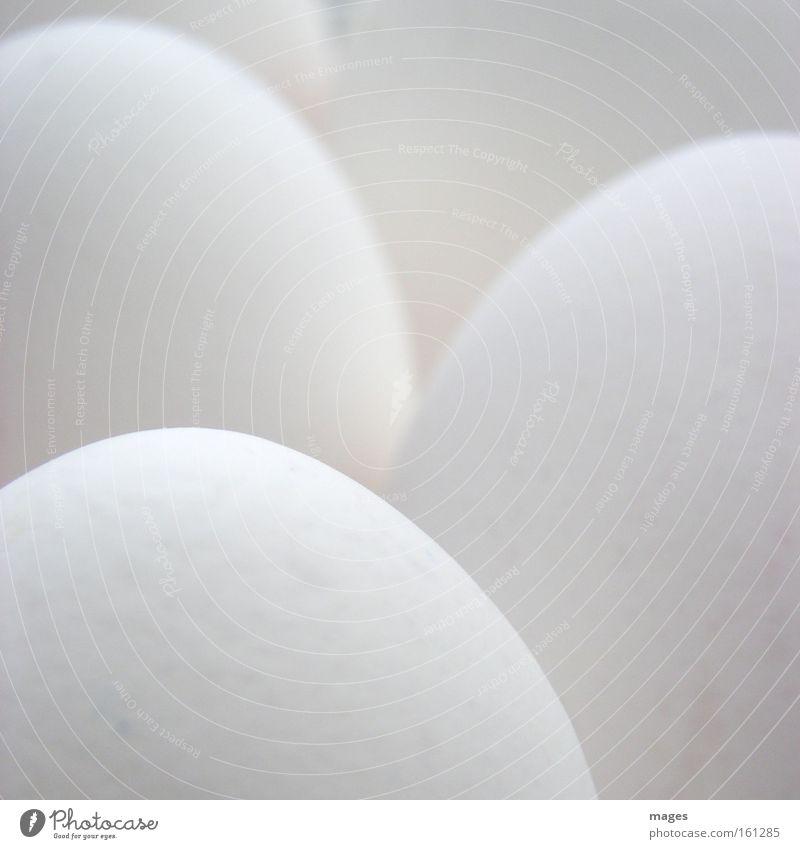 Eier weiß hell frisch Gastronomie Qualität Osterei diffus Monochrom Kühlschrank Eierschale Grauwert Hühnerei