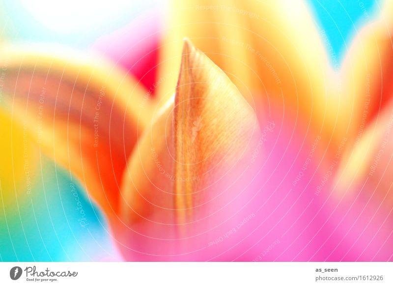 Colourflash Lifestyle Leben Sinnesorgane Garten Ostern Umwelt Natur Pflanze Frühling Sommer Tulpe Blüte Blütenblatt Blumenstrauß Blühend leuchten Wachstum