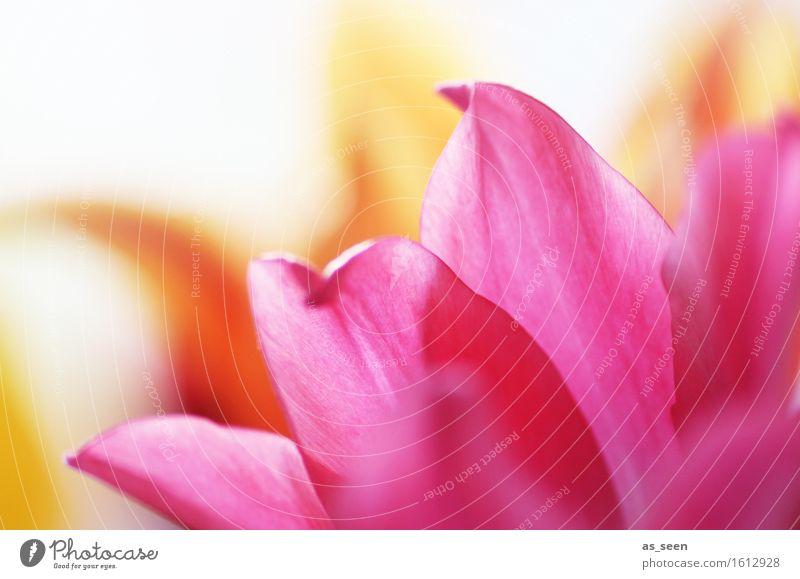 Pink dreams Natur Pflanze schön Sommer Farbe Blume Umwelt Frühling Blüte Stil Lifestyle Garten rosa Design orange Wachstum